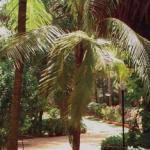 Vila Goesa, Goa, Indie